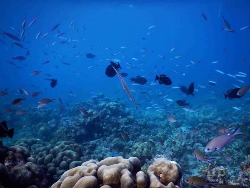 reserve cousteau